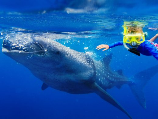 niño snorkel con tiburón ballena