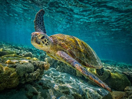 Tour isla Contoy tortuga