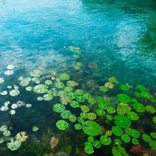 Tour Bacalar cenote