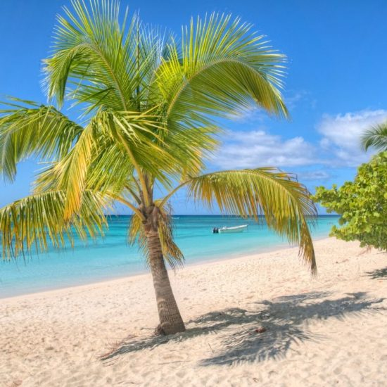 Tour isla Contoy palmera