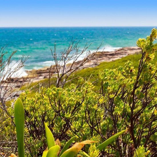 Tour isla Contoy landscape