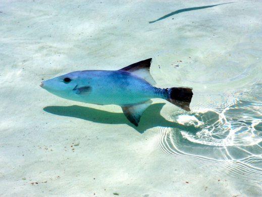Tour isla Contoy pez