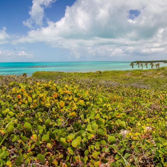 Tour isla contoy vista