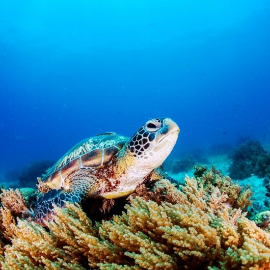Cozumel Snorkel