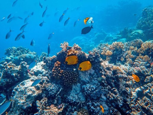 Arrecifes en Cozumel