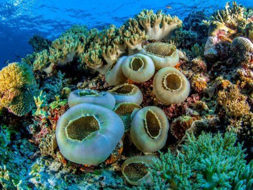 Arrecifes Chankanab
