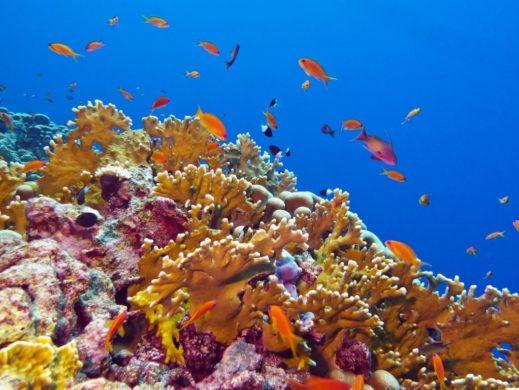 Arrecifes de coral en Cozumel